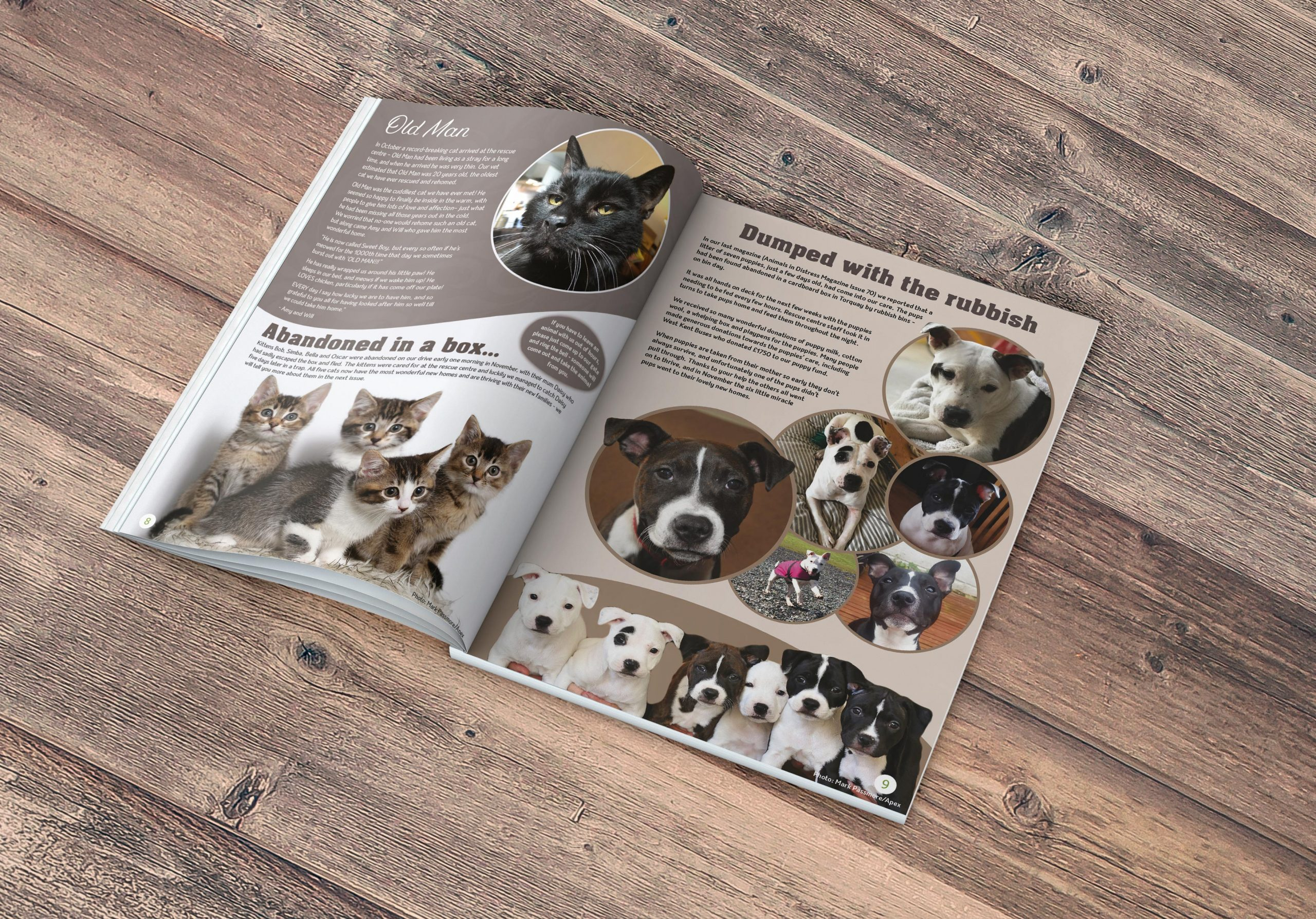 animals-in-distress-magazine